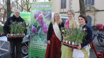 Permalink auf:Schachblumenmarkt